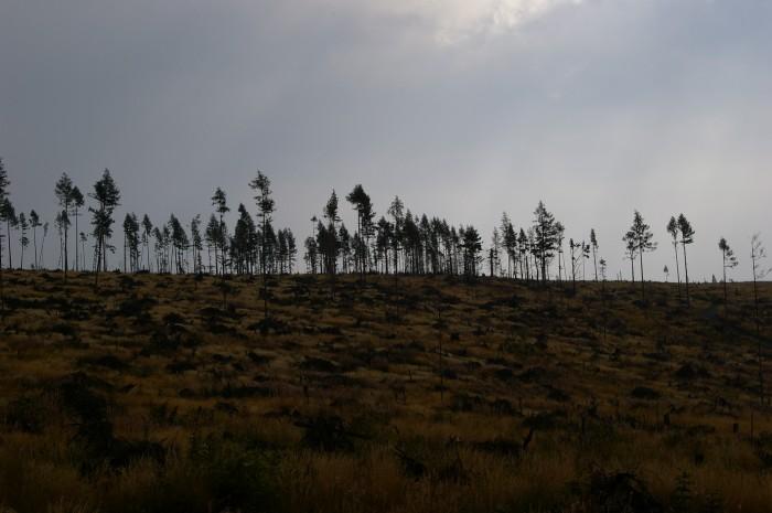 Obraz po wiatrołomie