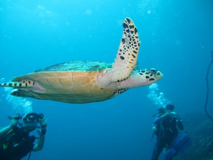 Podwodny świat wyspy Phi Phi