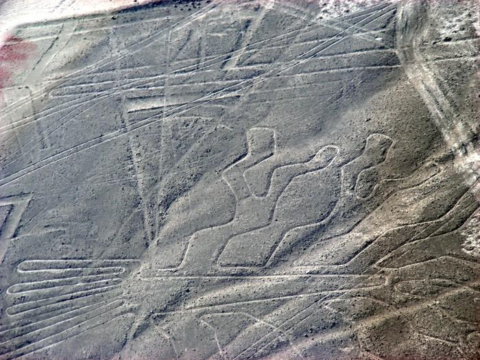 Linie na płask. Nazca - Tree_drzewo