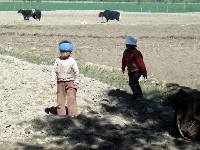 Jaki pracujące w polu