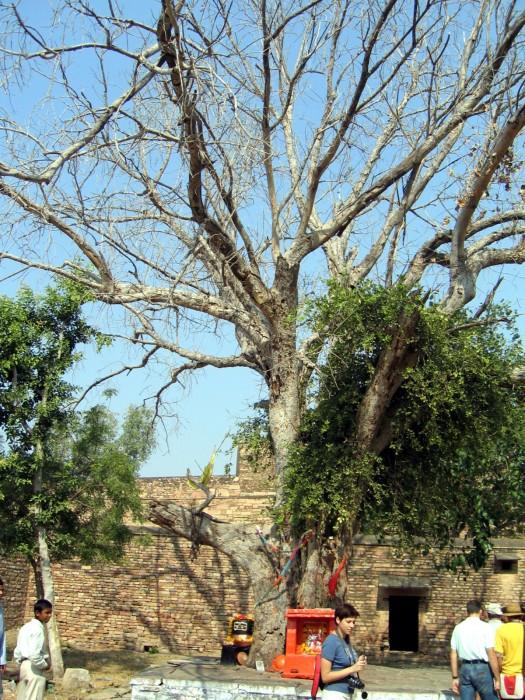Forteca Man Singha