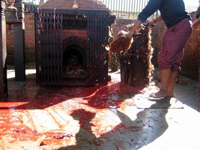 Swiątynia - uśmiercanie ofiary