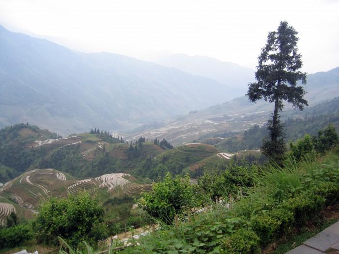 Widoki na tarasowe pola ryżowe