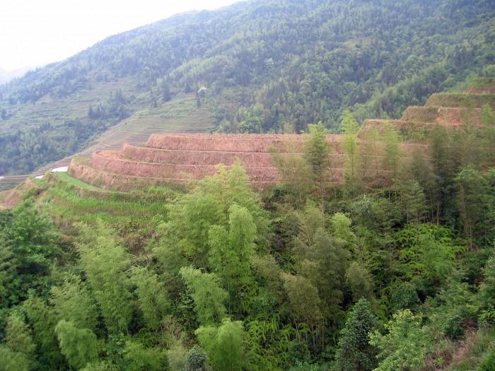 Widok na tarasowe pola ryżowe