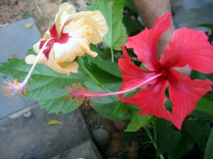 Kwiaty w ogrodzie przy P. Domu