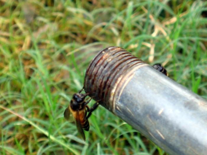 Pszczoły pijące wodę