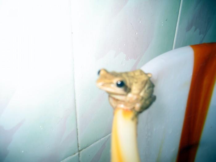 Goście w hotelowej łazience