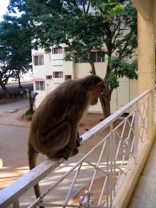 Goście na balkonie w hotelu
