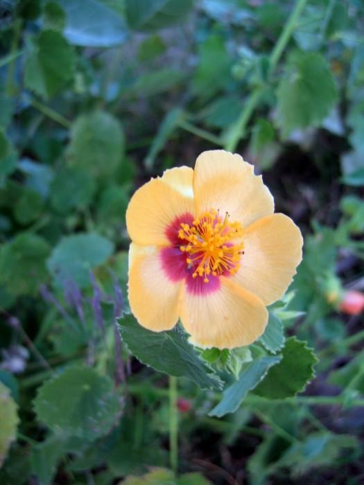 Dzikie kwiaty na ugorach