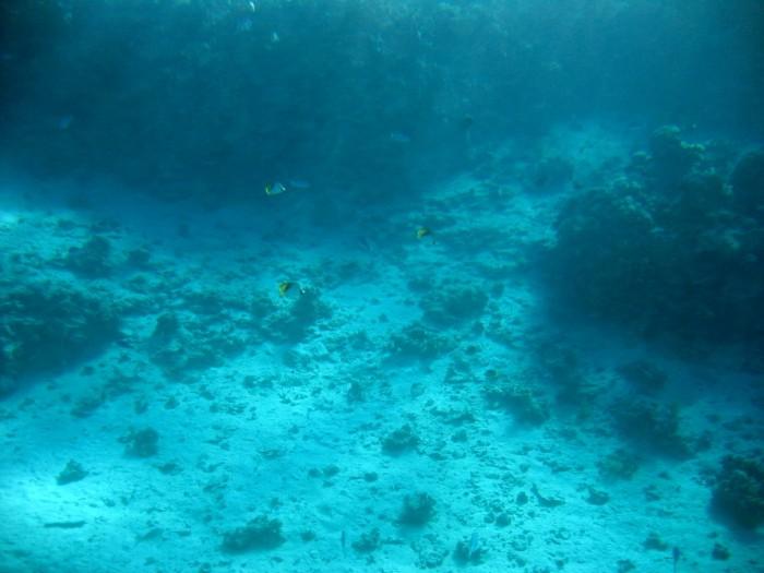 Podwodne życie na rafie koralowej