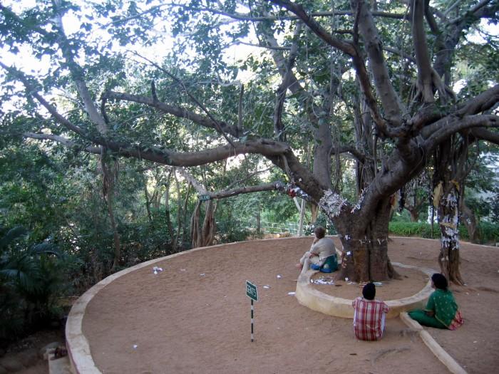 Miejsce medytacji pod drzewem kroczącym