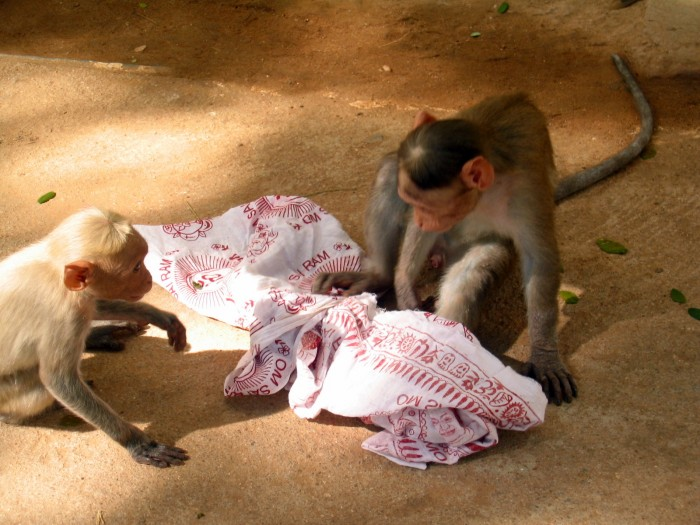 Małpie figle