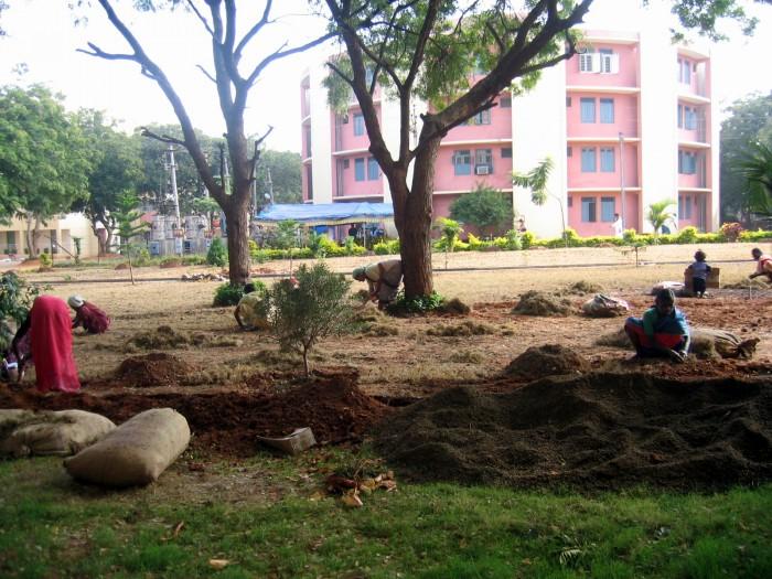 Sadzenie trawnika