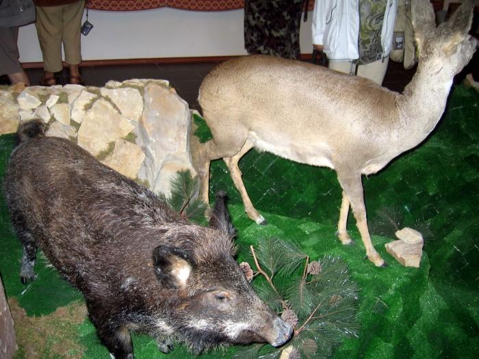 Muzeum Karpackiego Parku Narodowego