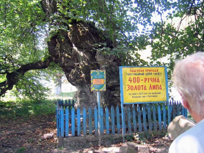 Złota lipa - pomnik przyrody