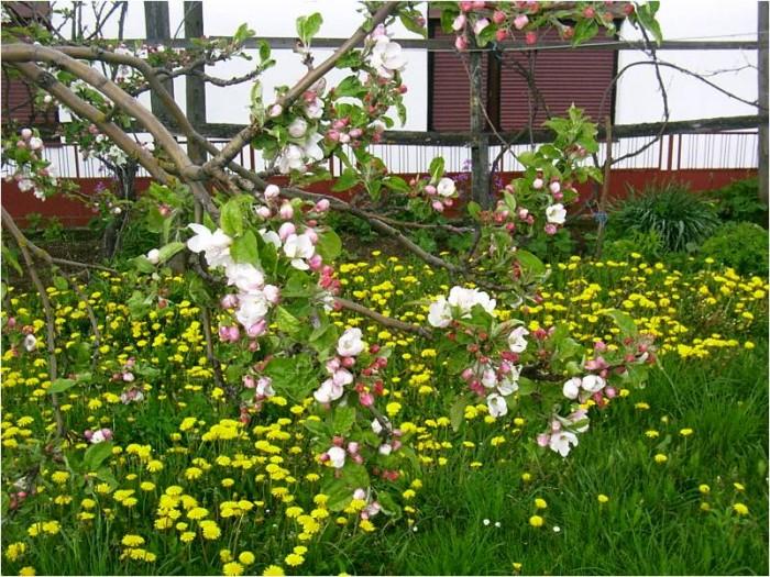 wiosna w górach Chorwacji