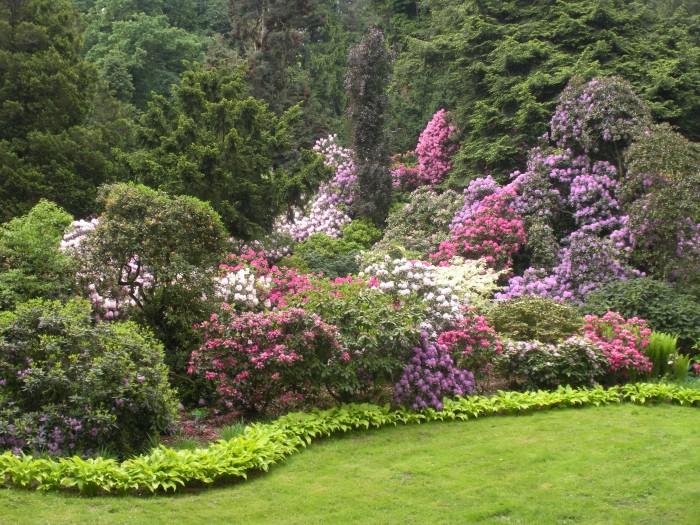 różnokolorowe rododendrony w maju w arboretum Wojsławice