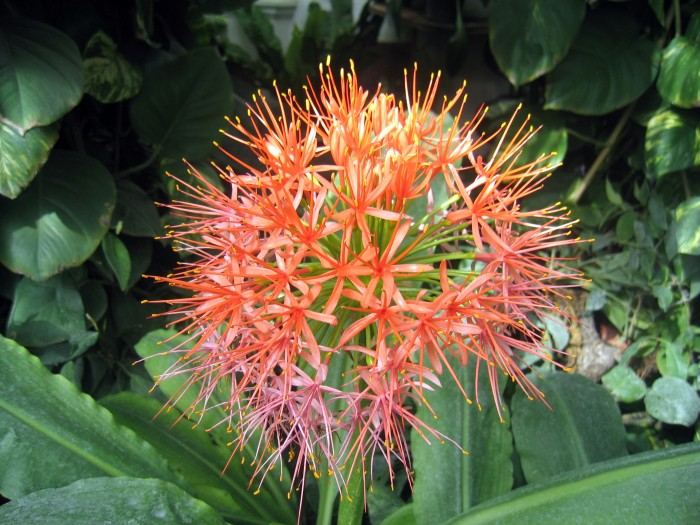 Palmiarnia przyzamkowa